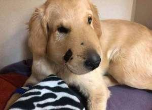 狗狗咬主人的原因?