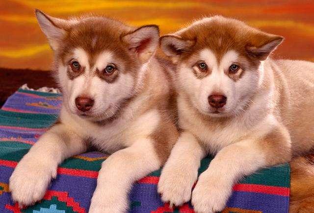 养公狗和养母狗有什么区别?