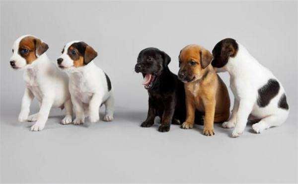 适合国内城市养的狗狗有哪些?