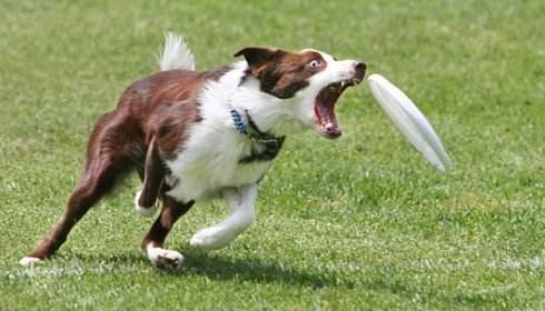 小狗咬人怎么训练?