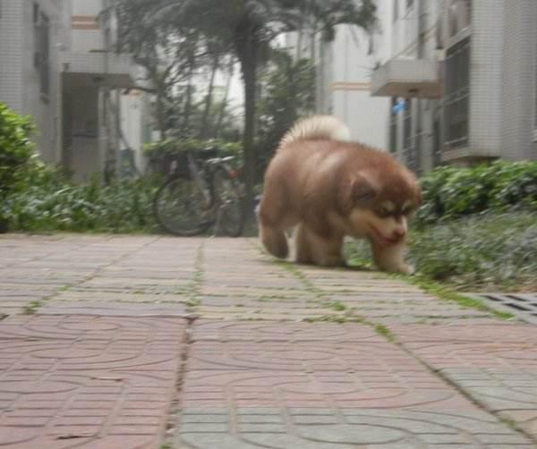 怎么训练狗狗找东西?
