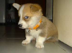 狗狗肠胃炎症状预防与治疗