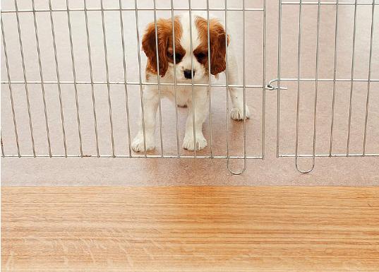 训练狗狗需要哪些东西?