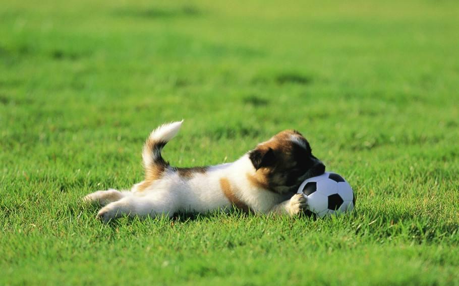 怎么给狗狗制定训练计划?