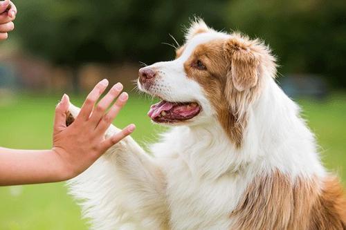 好狗狗是如何培养出来的?