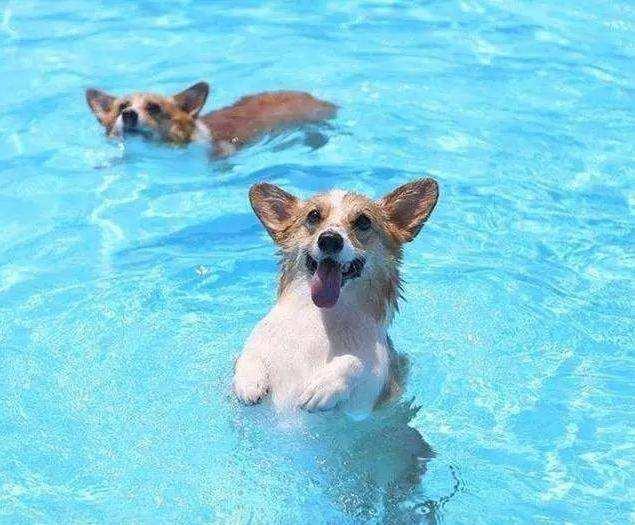 夏天养狗主人需要做些什么?