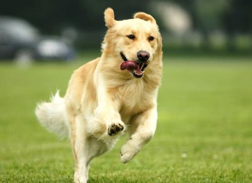 判断狗狗发抖的原因