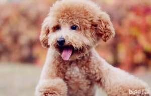 狗狗奶粉如何辨别好坏,选择狗狗奶粉要注意什么