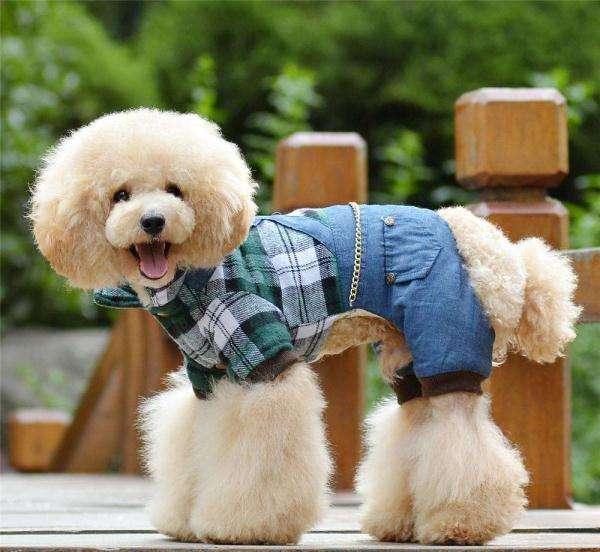 哪些狗狗不能穿衣服?