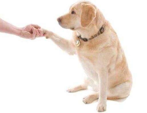 怎样训练爱犬握手?
