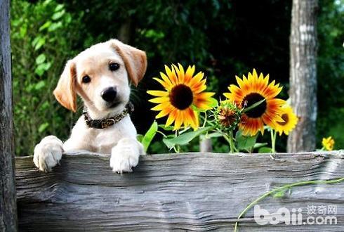 怎么给狗狗起名字?狗狗叫什么名字好听?