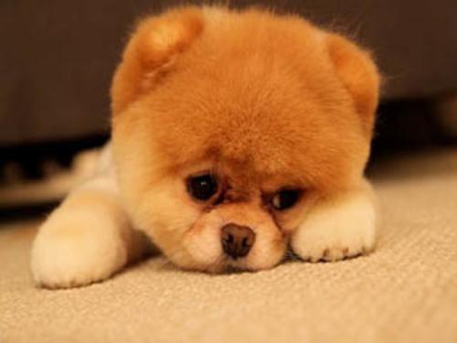 怎么在狗狗面前树立威信