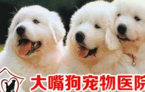 大嘴狗宠物诊所(岗贝店)