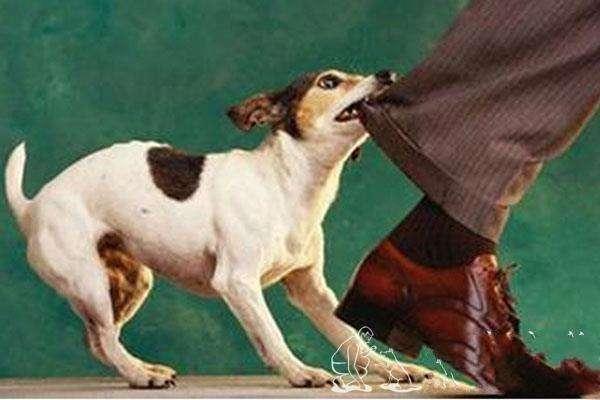 科学训练狗狗中的十对十错