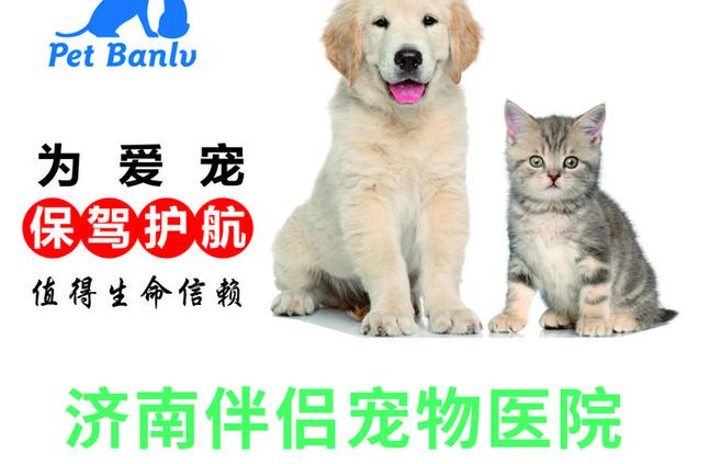 伴侣宠物医院(家乐福店)
