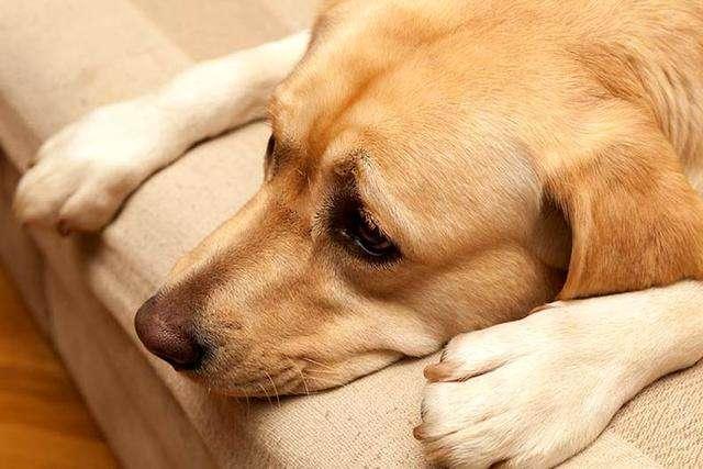 狗狗为什么会咬主人?