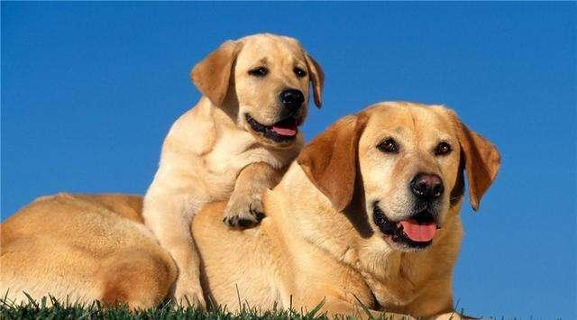 养狗的这些误区你知道吗?