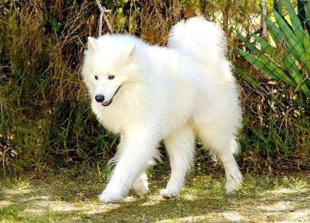 怎样训练狗狗贪玩不爱回家?