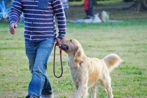 如何训练狗狗随行?