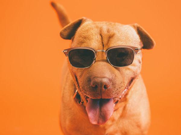 宠物狗打疫苗过敏怎么办?