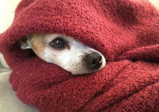 狗狗干呕怎么办【原因及治疗方法】