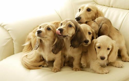 狗狗生产需要送到医院吗?