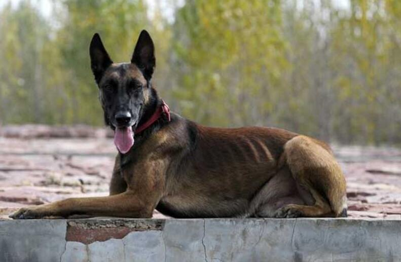 狗狗生产前有什么症状表现,狗狗生产前的征兆!