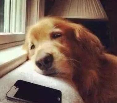 你以为的很爱狗狗的一些行为,其实在害它
