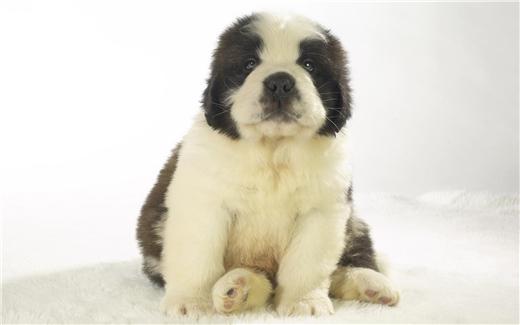 分娩期母犬的护理方法