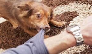 狂犬病早期的症状?