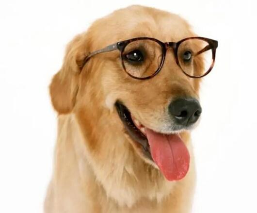 如何判断狗狗身体是否健康