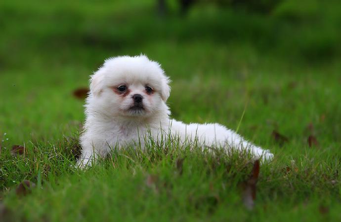 狗狗吃花生好吗?狗狗能吃花生米吗