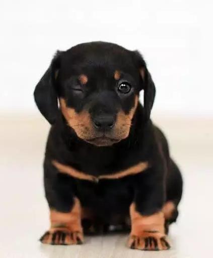 狗咬人究竟是谁得罪了谁?