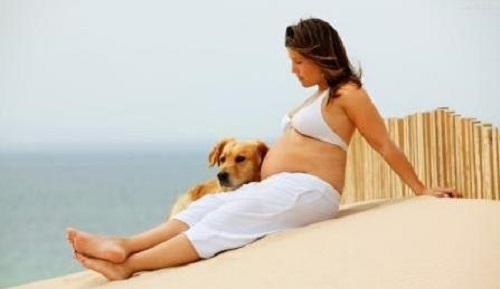 狗狗会对孕妇有影响吗?