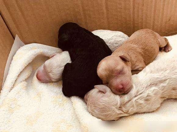 怎么训练狗狗习惯睡狗窝?