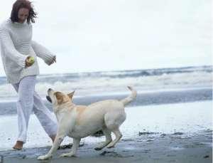 如何有效制止狗狗的胡乱吠叫?