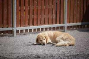 狗狗对主人的态度,从它睡觉的姿势就能看出?