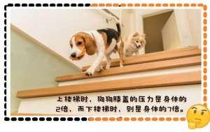 狗狗爬楼梯好不好?