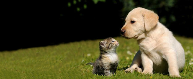 ‼️寻狗必读‼️10年工作经验教你找到走丢的小狗