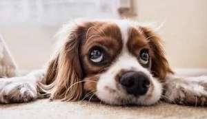 """6个喂养小狗的普遍""""错误观念"""""""