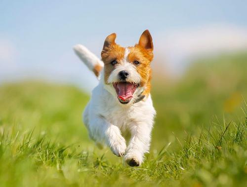狗狗偏食的危害性?