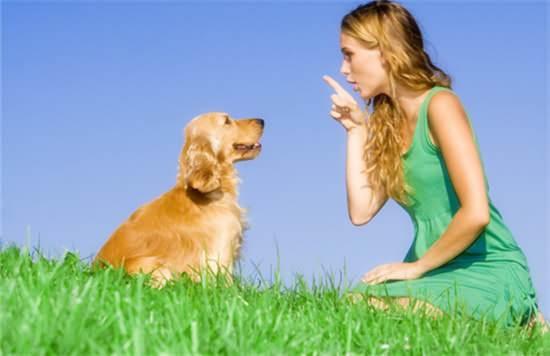 怎么教狗狗作揖?