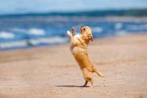 小狗狗跳舞训练教程