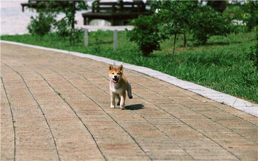 什么狗最好养、最适合你养