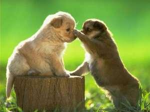 怎么训练被宠坏的狗狗呢?