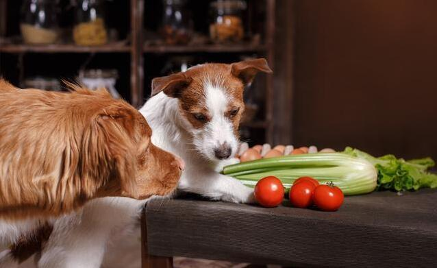狗狗发情期内,主人家要记牢这种事,对它有益处