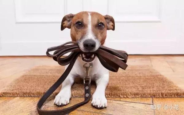 为什么主人不在家狗狗会咬东西?