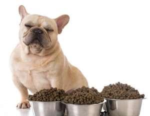 为什么狗狗不吃狗粮?