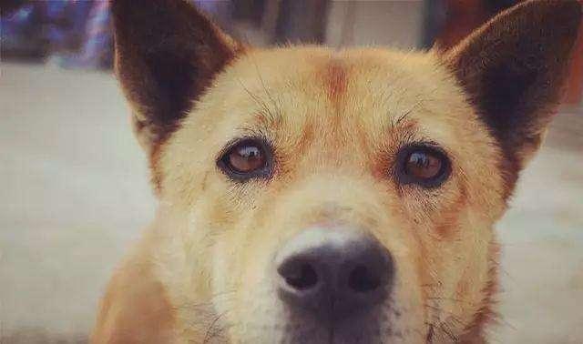 狗狗发现有狗瘟还能救吗?