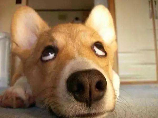 狗狗吐黄水怎么办呢?